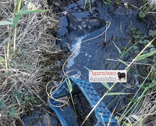Σκυλί βρέθηκε δεμένο με σκοινί και πεταμένο στον βάλτο του Άργους