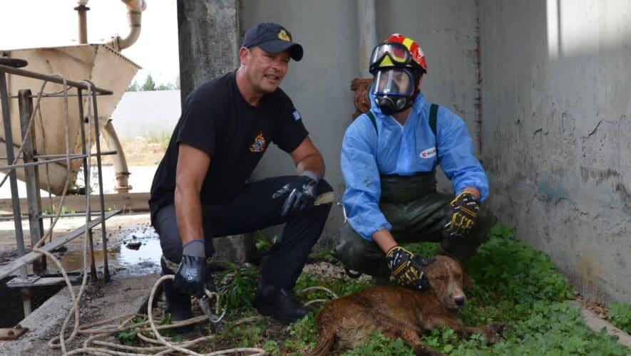 Επιχείρηση διάσωσης σκύλου από τον βιολογικό καθαρισμό
